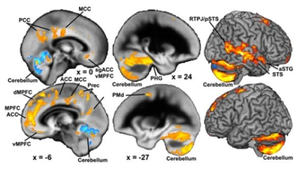 brain-development-along-life