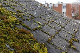 How to Deal With Roof Moss