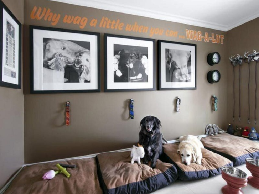 Tips On Living Safely Comfortably with Your Pet