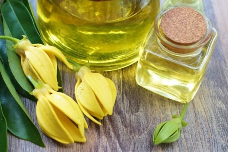 What is ylang-ylang? Curiosity and virtue of the flower of all flowers